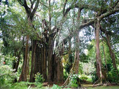 Jardin-botanique-de-Harrison-Smith-tahiti-heritage