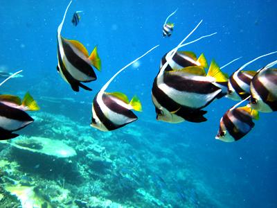 Kalhuhandhihuraa (LUX* Maldives)