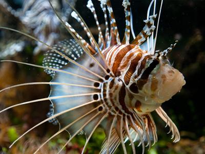 L'Aquarium La Colline (Muséum-Aquarium de Nancy / Wikimedia Commons)