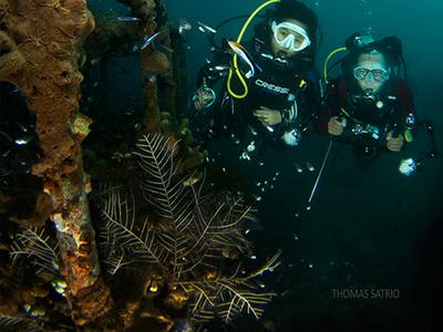 Garden Coral ©tomfreakz