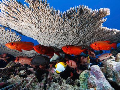 Lesleen M. Wreck (NOAA's National Ocean Service / Flickr)