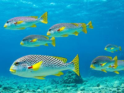 Lighthouse Reef (Tchami / Flickr)