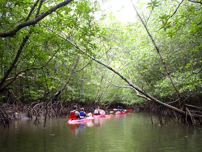 Mangroves de Langkawi (Cam Switzer/ Flickr)