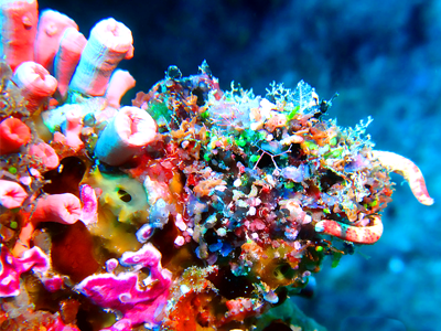 Motu Nuhi Nuhi (Derek Keats / Flickr)