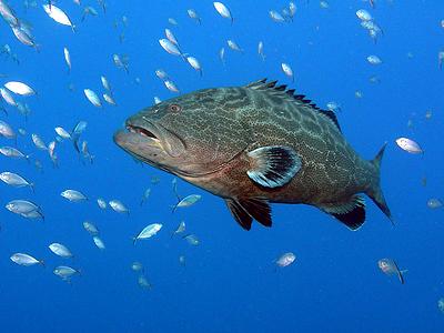 Mur de Rum Cay (Gary Rinaldi / Flickr)