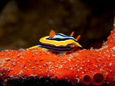 Nudibranch Garden (prilfish / Flickr)