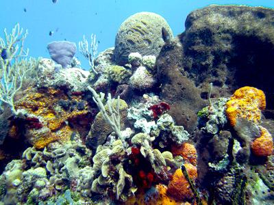 Paradise Reef - amanderson2