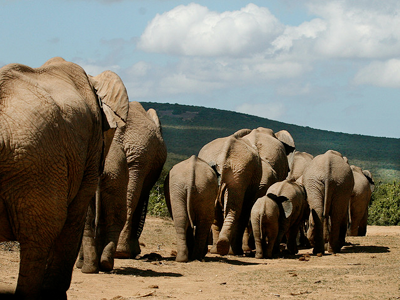 Parc National Addo Elephant (Matt MacGillivray / Flickr)