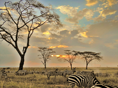 Parc National du Serengeti (Mike / Flickr)