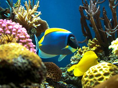 Reef Canada (ChrisA1995 / Flickr)