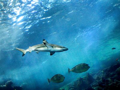 Shark Wall (greyloch / Flickr)
