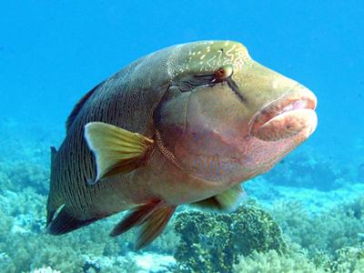 Tapu (Patryk Krzyzak / Wikimedia Commons)