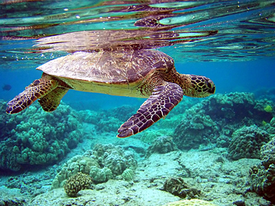 Turtle Reef (Jim Trodel / Flickr)