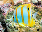 Aquarium (Stevebidmead / Pixabay)