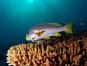 Banana Reef (Nazir Amin/ Flickr)