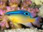 L'Aquarium (zsispeo / Flickr)