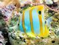 L'Aquarium (Belle Mare) (Stevebidmead / pixabay)