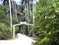 La forêt de Jozani (Kent MacElwee/Flickr)
