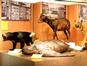 Lee Kong Chian Natural History Museum (Raffles Museum / Facebook)