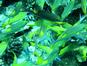 Les Grottes Bleues (LUX* Maldives)
