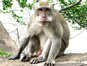 Parc national de Con Dao (Eric Bajart / Wikimedia Commons)