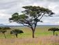 Parc National de Tarangire (Harvey Barrison / Flickr)