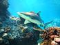 Tiki (Geoff Shuetrim / Flickr)