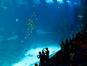 Underwater World (Brian Jeffery Beggerly / Flickr)