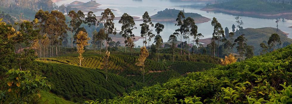 Séjour à Nuwara Eliya : Ceylon Tea Trails