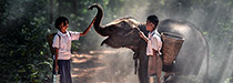 Enfants thaïlandais nourrissant un éléphanteau