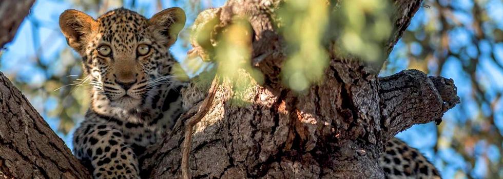 Safari en famille en Tanzanie