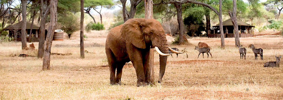 Safari en Tanzanie au Sanctuary Swala Camp