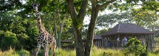 Hôtel Disney's Animal Kingdom Lodge