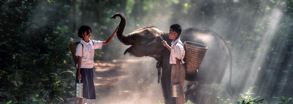 Vestiges d'Ayutthaya