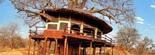 Hôtel lodge Tarangire TreeTops